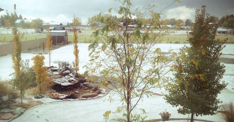 WinterImgLow